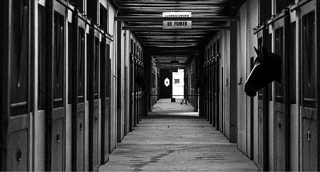 cadre noir de Saumur