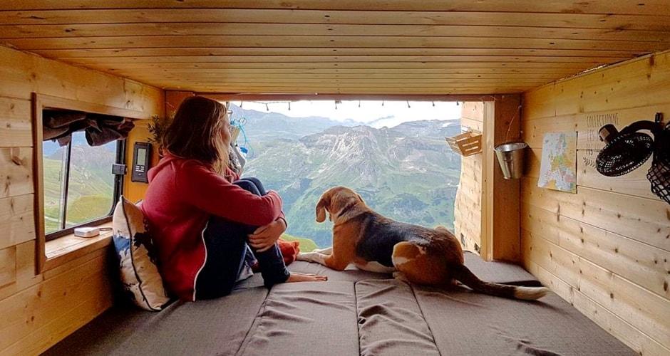 animaux de compagnie en camping-car