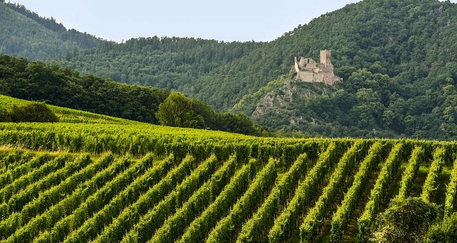 La route des vins d'Alsace en camping-car