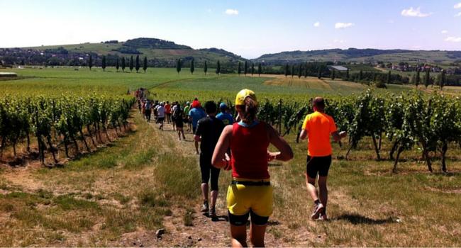 La Route des Vins d'Alsace en camping-car_Marathon_vignoble