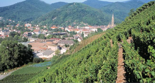 La Route des Vins d'Alsace en camping-car_Thann