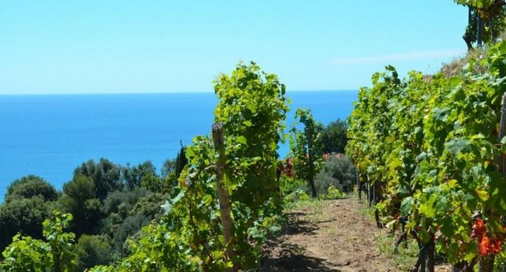 La route des vins de Provence en camping-car