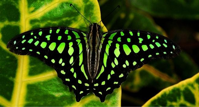 jardin-aux-papillons-vannes
