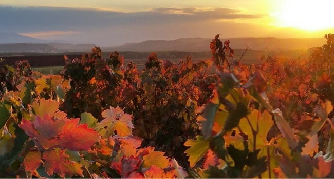 vin-rioja-espagne-pays-basque-camping-car