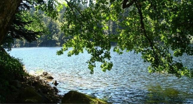 Les Vosges en camping-car