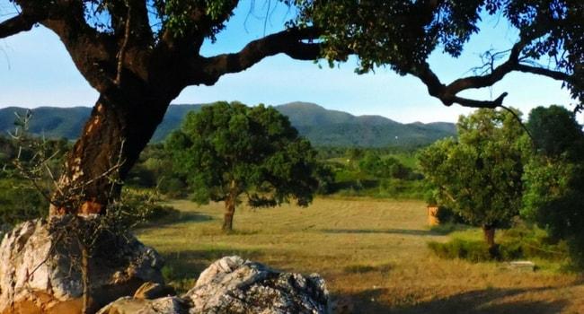 location-jardin-gamping