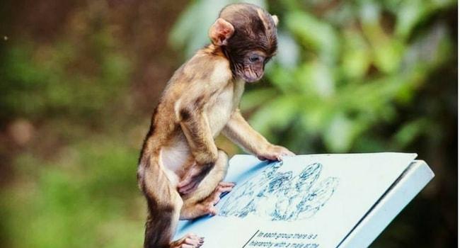 montagne-des-singes-strasbourg