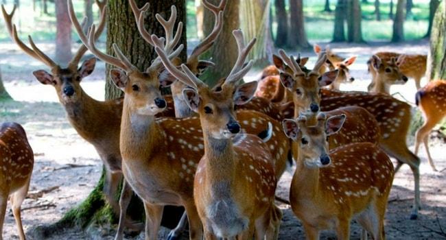 reserve-zoologique-haute-touche