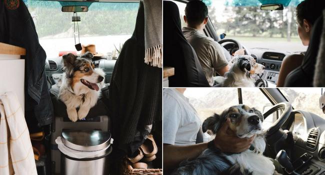 Animaux de compagnie en camping-car_Habituer son animal