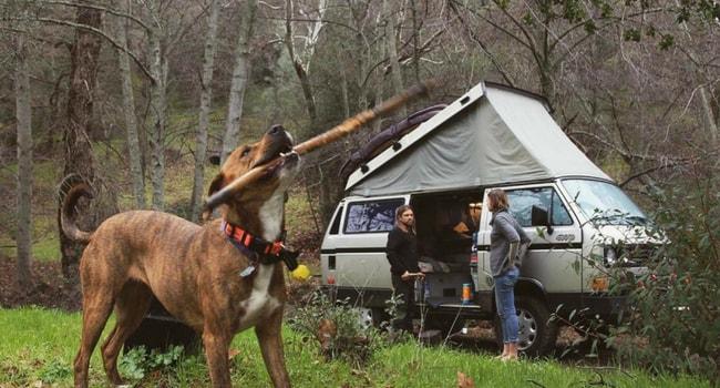 Animaux de compagnie en camping-car_coordonnées-étiquettes