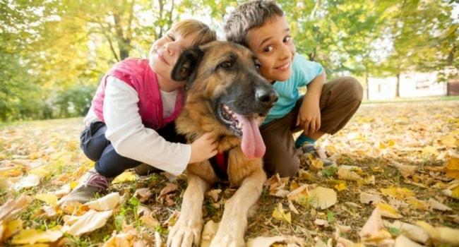 Les solutions pour faire garder son animal en vacances-Famille et amis