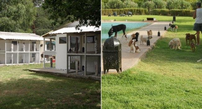 Les solutions pour faire garder son animal en vacances-les pensions