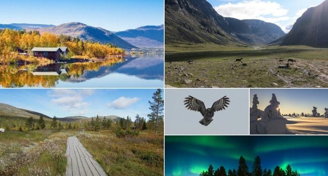 En route vers la Finlande en camping-car_Laponie