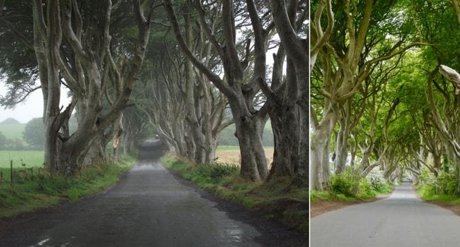 L'Irlande du Nord en camping-car_DarkHedges
