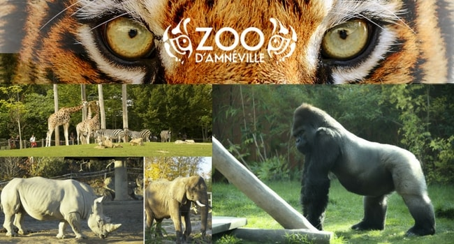 La tournée des zoos en camping-car_Amnéville