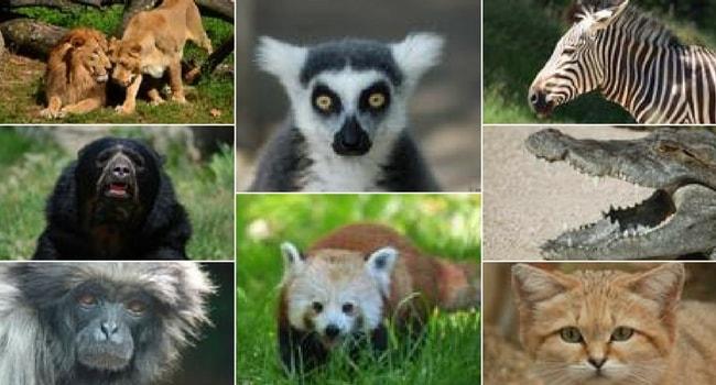 La tournée des zoos en camping-car_Jardin Zoologique de Lyon