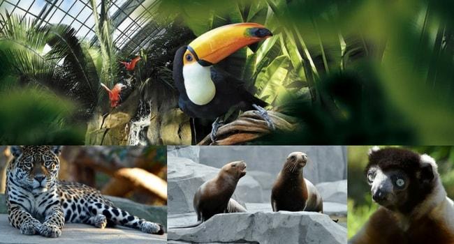 La tournée des zoos en camping-car_Parc Zoologique de Paris
