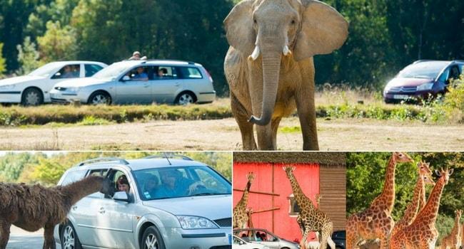 La tournée des zoos en camping-car_Planète Sauvage