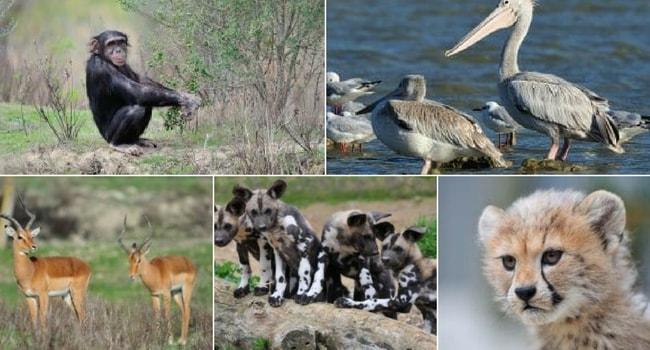 La tournée des zoos en camping-car_Réserve Africaine de Sigean