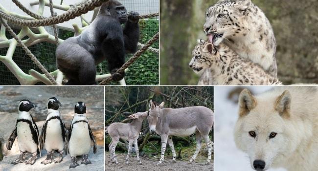 La tournée des zoos en camping-car_Zoo de Bâle