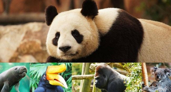 La tournée des zoos en camping-car_ZooParc de Beauval