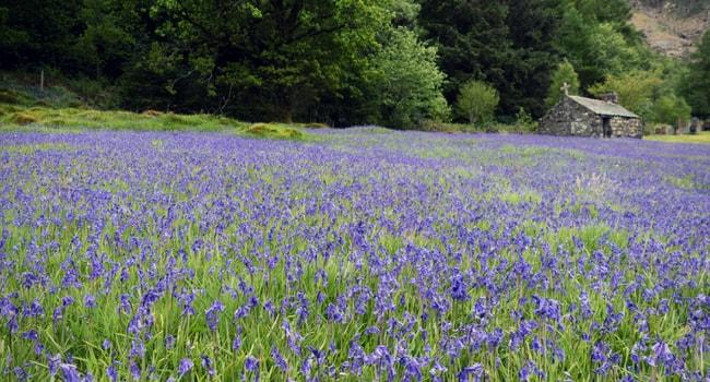 Roadtrip fleuri en camping-car_jacinthe des bois