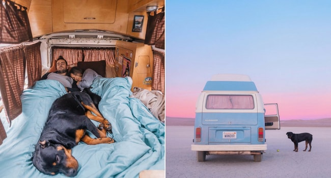 chien camping-car