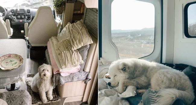 Vos animaux de compagnie en camping-car_Prudence