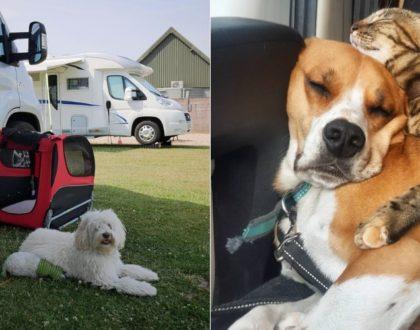 Vos animaux de compagnie en camping_car