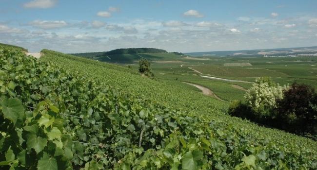 La Champagne-Ardenne en camping-car_Côte des Blancs