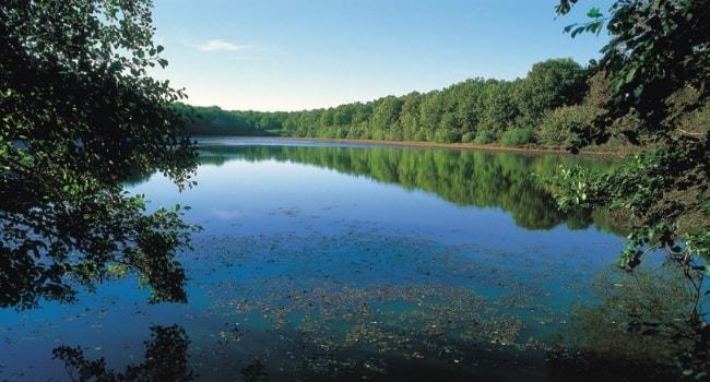 La Champagne-Ardenne en camping-car_Parc Naturel Régional de la Forêt d'Orient