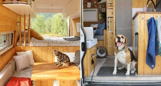 animaux_compagnie_three_vanlifers