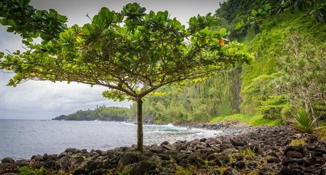 La Réunion en camping-car_L'Anse des Cascades