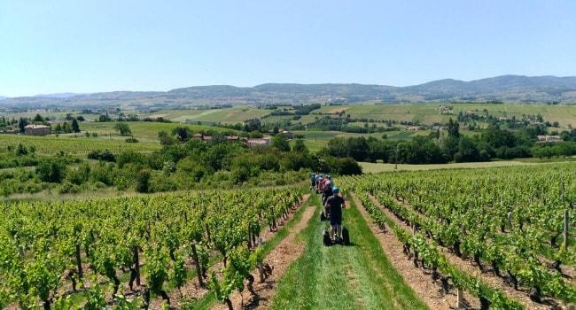 Balade au cœur des vignobles du Beaujolais