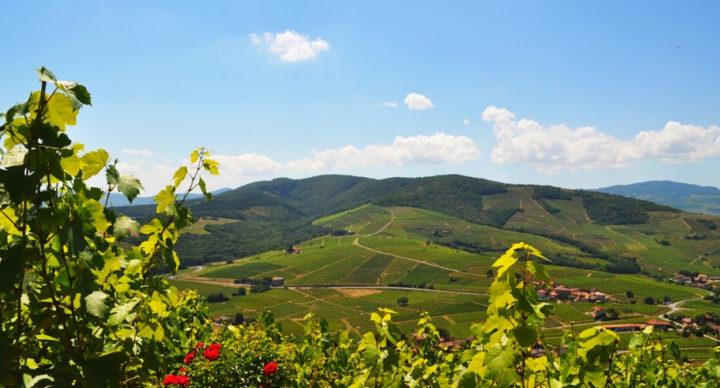 Excursion sur la route des vins du Beaujolais en camping-car
