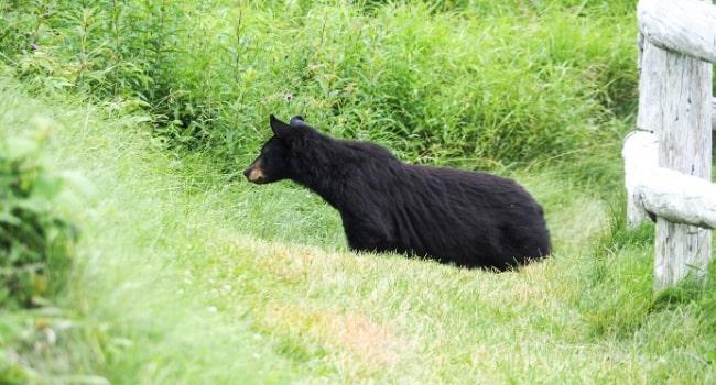 Le Canada en van vu par Des fenêtres sur le monde_Premier ours