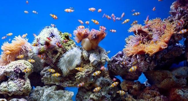 aquarium__golfe_du_morhiban