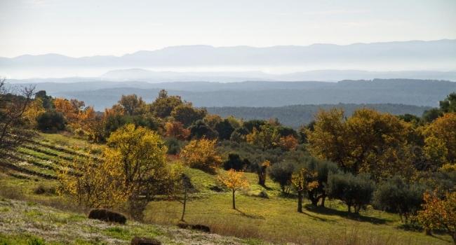 où-partir-en-octobre-Provence