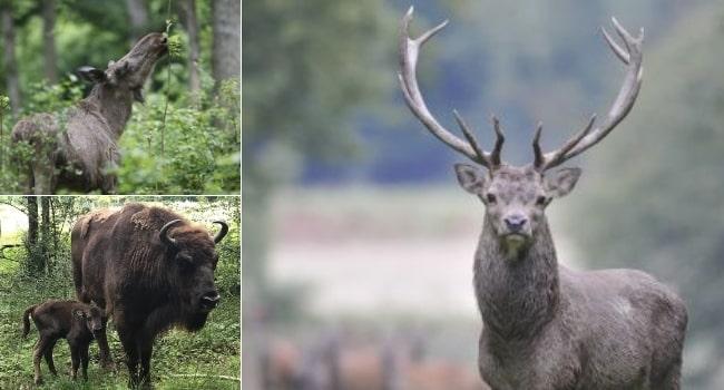 ou-partir-en-juin-en-france-parc -naturel-regional-de-la-foret-d-orient-espace-faune