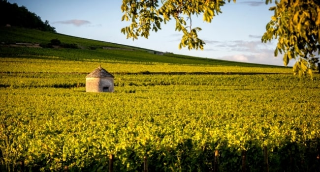 partir-en-aout-en-france_bourgogne-route-des-grands-crus-cote-de-beaune-cabotte